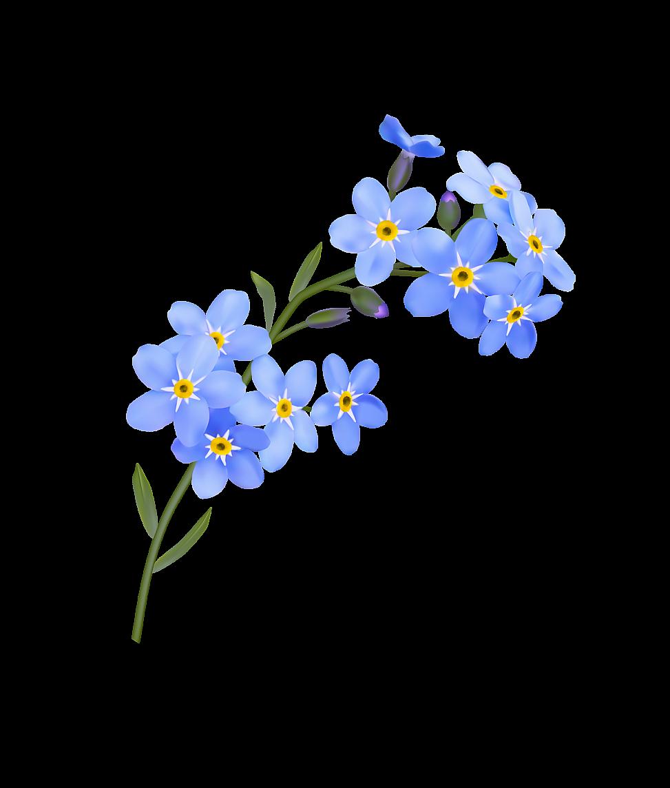 Forget me not flower transparent